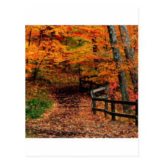 Autumn Mccormick Creek State Park Indiana Postcard
