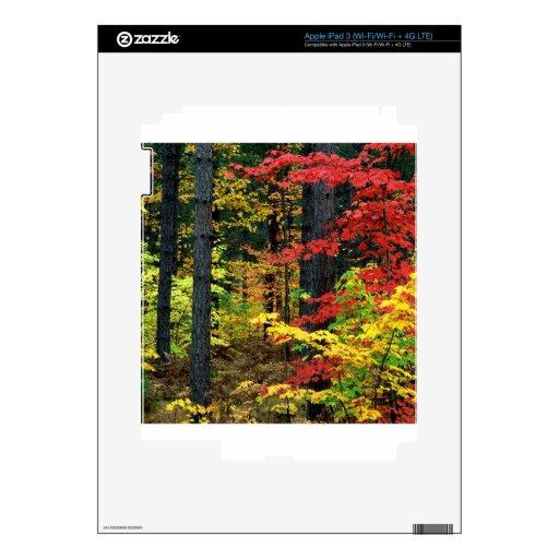 Autumn Michigan iPad 3 Skins