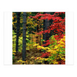 Autumn Michigan Postcards