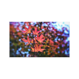 Autumn Momiji Canvas Print