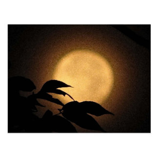 Autumn Moon Postcard