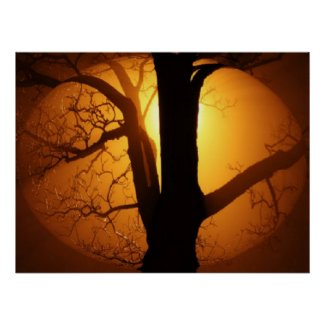 Autumn Moon Shining Through the Tree Print print