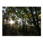 Autumn Morning at Shenandoah National Park Postcard