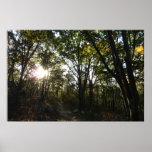 Autumn Morning at Shenandoah National Park Poster