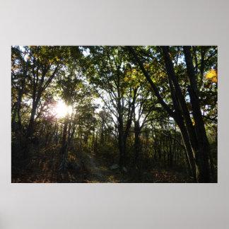 Autumn Morning at Shenandoah Poster Print