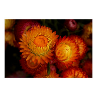 Autumn Mums Posters