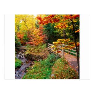 Autumn Munising Trail Alger County Michigan Postcard