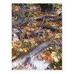 autumn mush postcard