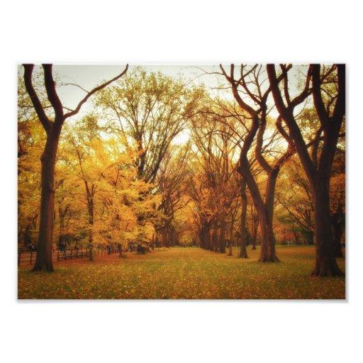Autumn - New York City Photo Print