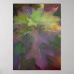 Autumn Oak Leaf Hydrangea Poster Print