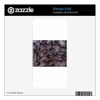 Autumn Oak Leaves iPhone 4S Skin