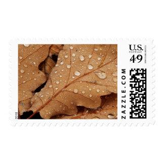 Autumn Oak Leaves Postage Stamp