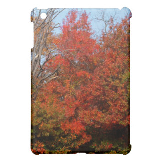 Autumn Oak Trees photo iPad case