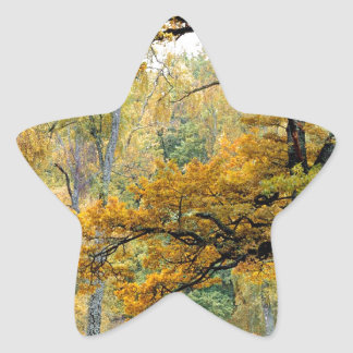 Autumn Old Growth Forest Scottish Highlands Stickers