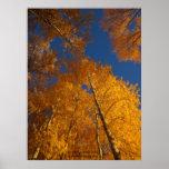 Autumn on Ojito Creek Poster