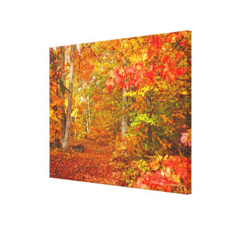 """AUTUMN PALETTE""/LEAF-STREWN PATH THROUGH FALL FOL CANVAS PRINT"