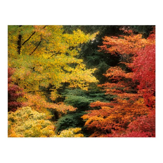Autumn Palette Postcard