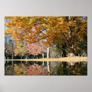 Autumn Park, Pond Poster