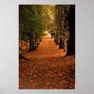 Autumn Pathways Poster