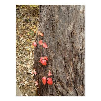 autumn peeking through postcard