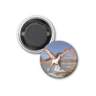 Autumn Pegasus 1 Inch Round Magnet
