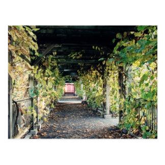 Autumn Pergola Postcard