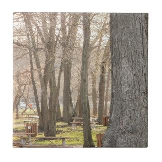 Autumn Picnic Trees Tiles