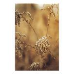 Autumn Plants, Sepia, Peaceful Stationery Paper