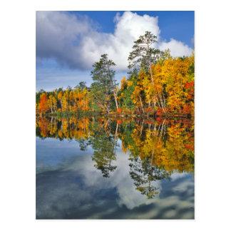Autumn pond reflections, Maine Postcard