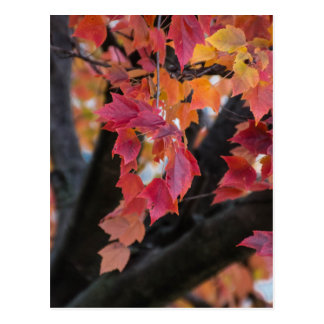 Autumn Post Cards