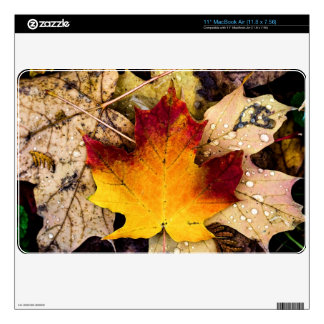 "autumn presence decal for 11"" MacBook air"