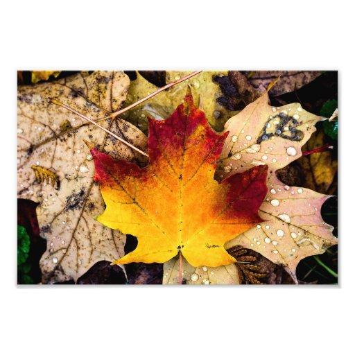 autumn presence photo