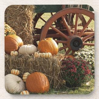Autumn Pumpkins And Mum Display Coaster