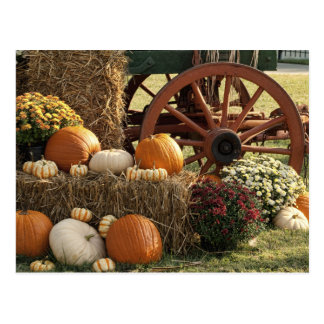 Autumn Pumpkins And Mum Display Postcard