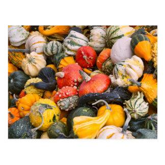 Autumn Pumpkins, Gourds and Squashes Postcard