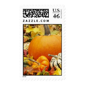 Autumn Pumpkins Postage Stamp