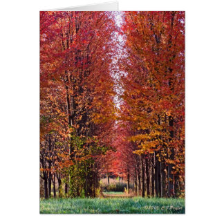 """""""Autumn Red 2"""" Card"""