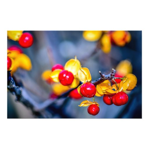 Autumn Red Berry and Yellow Leaf Photograph