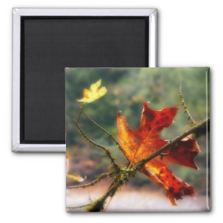 Autumn Red Leaf Nature Photo 2 Inch Square Magnet