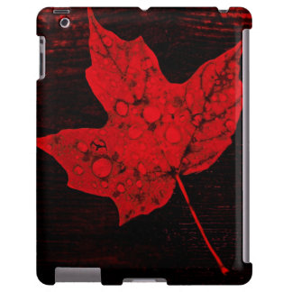 autumn red maple leaf with rain drops