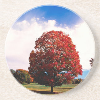 Autumn Red Maple Tree Forest Clermont Kentucky Coaster