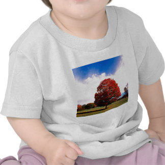 Autumn Red Maple Tree Forest Clermont Kentucky Tshirt