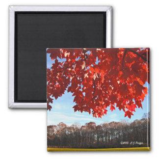 """""""Autumn Red"""" square magnet"""