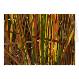 Autumn Reeds Number 1 Greeting Cards
