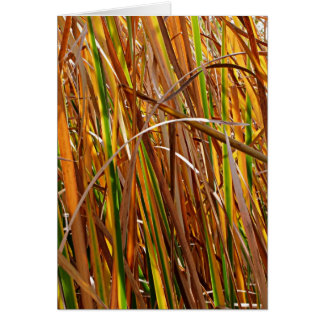 Autumn Reeds Number 5 (Vertical) Cards