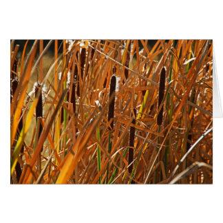 Autumn Reeds Number 6 Card