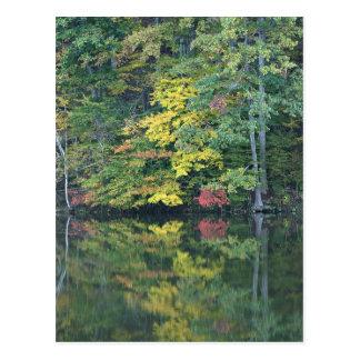 Autumn Reflections Postcard