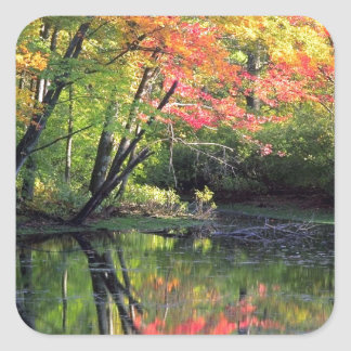 Autumn River Reflections Square Sticker