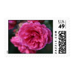 Autumn Rose Postage Stamps