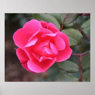 Autumn Rose Poster